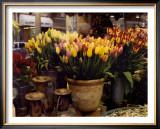 Tulips, Paris Posters by Zeny Cieslikowski