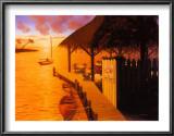 Palm Cove Art by David Marrocco