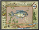Blue-Gilled Sunfish Print by Anita Phillips