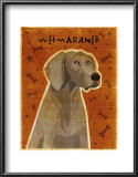Weimaraner Prints by John Golden