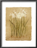 Narcissus Prints by Cheri Blum
