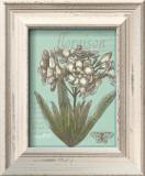 Floraison Nouveau I Prints by Devon Ross