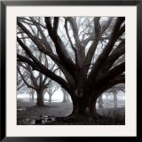 Oak Grove, Winter Arte por William Guion