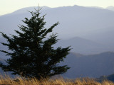 A Lone Spruce Tree and the Appalachian Mountains Ridges in Distance Photographic Print by Raymond Gehman