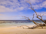 Driftwood on a Desroches Island Beach Fotografisk tryk af Alison Wright