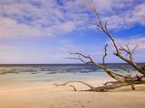 Driftwood on a Desroches Island Beach Fotografie-Druck von Alison Wright