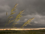 Prairie Wedge Grass Stands Out Against Thunderclouds in Grasslands Photographic Print by Phil Schermeister