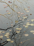 Abstract View of Lily Pads and a Willow Branch Reflected on a Pond Photographic Print by Todd Gipstein