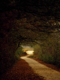 Dirt Road Through a Forest Leading Out into a Field Fotografisk tryk af Raymond Gehman