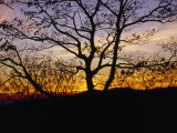 Sunset Through Silhouetted Trees Photographic Print by Raymond Gehman