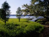 Pond Cypress Trees Growing Along the Shore of Kentucky Lake Photographic Print by Raymond Gehman