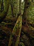 An Old Haida Cedar Canoe Found in the Forest Photographic Print by Raymond Gehman