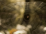 A Spider in a Web That Glints in the Sun Photographic Print by Phil Schermeister