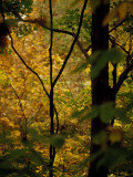 Grape Vines and Trees in Autumn Hues Fotografisk tryk af Raymond Gehman