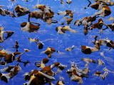 Aquatic Plants on the Water's Surface Near Pabay Mor Photographic Print by Jim Richardson