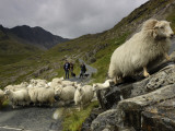 A Sheep Herd and Herders Photographic Print by Jim Richardson