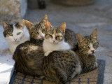 A Group of Four Kittens Sit on a Mat Photographic Print by Richard Nowitz