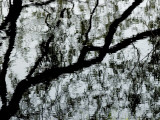 Reflection of a Tree on the Surface of a Pond Photographic Print by Todd Gipstein