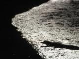 An Alligator on the Beach Photographic Print by Jodi Cobb