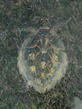 Looking Down at a Large Turtle Photographic Print by Beverly Joubert