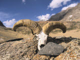 Offerings of a Mani Stone and Sheep Horns and Skull at Mount Kailash Photographic Print by Alison Wright
