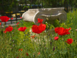 Poppies Grow around an Ancient Ionic Capital Near the Benaki Museum Photographic Print by Richard Nowitz