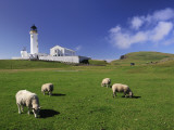Sheep Graze in a Lush Pasture Near a Lighthouse Photographic Print by Jim Richardson