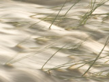 Grasses Bend in the Muddy Waters of the Little Missouri River Photographic Print by Phil Schermeister