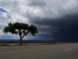 A Lone Tree on Highway 68 to Taos and Storm Clouds Fotografisk tryk af Raul Touzon