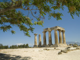 The Doric-Style 550 Bc Temple of Apollo and a Branch of an Olive Tree Photographic Print by Richard Nowitz