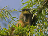 A Monkey in its Habitat Photographic Print by Beverly Joubert