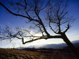 Silhouetted Oak Tree Branches at Sunset Photographic Print by Raymond Gehman
