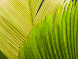 Palm Leaves Photographic Print by Alison Wright