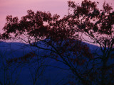 Silhouetted Tree, and Sunset over the Blue Ridge Mountains Photographic Print by Raymond Gehman