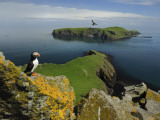 The Shaint Islands are Breeding Grounds for Puffins and Razorbills Fotografiskt tryck av Jim Richardson