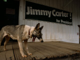 A Dog on the Porch of a Building with a Jimmy Carter Campaign Sign Photographic Print by Jodi Cobb