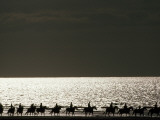 Vacationers Enjoy a Horseback Ride Along the Shore at Deauville Photographie par Jodi Cobb