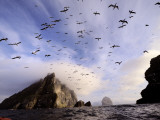 Cloud Covers a Sea Bird Rookery High on a Sea Stack Cliff Photographic Print by Jim Richardson