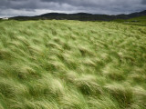 Marram Beach Grass Blowing on the Coast of the Isle of Lewis Photographic Print by Jim Richardson