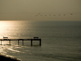 A Flock of Pelicans Fly Near a Pier in Gulf Shores Photographic Print by Jodi Cobb