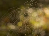 Backlit View of Part of a Spider Web Photographic Print by Phil Schermeister
