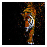Walking Tiger Giclee Print