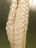 Close Up of Snake Skin Found in Little Missouri National Grasslands Photographic Print by Phil Schermeister