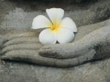 Buddha at Wat Yai Chai Khon Reprodukcja zdjęcia autor Alison Wright