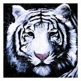 Tigre branco Pôsters