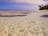 Seaweed Along a Desroches Island Beach Photographic Print by Alison Wright