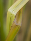 Magnification of Blades of Grass Growing in Yosemite Valley Lámina fotográfica por Phil Schermeister