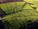 An Aerial of Contoured Fields Photographic Print by Beverly Joubert