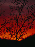Silhouetted Tree and Blazing Sky at Sunset over Blue Ridge Mountains Impressão fotográfica por Raymond Gehman