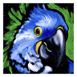 Macaw Prints